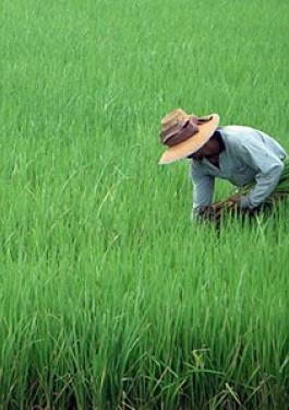 Rice Inspection Services