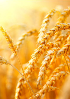 Wheat Inspection Services