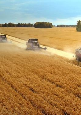 AGRI_GRAIN_WHEAT_OILSEEDS