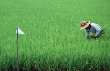 agri-rd-rice-inspection